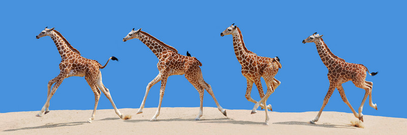 BABY GIRAFFE COLLAGE - SMOOTH SKY CURVED.jpg