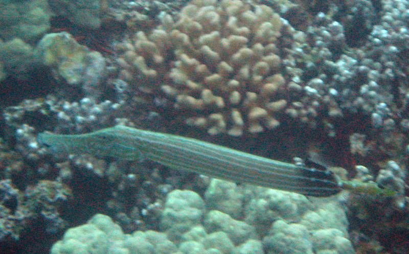 483- 20080416- Hawaii 20-Snorkelling IMG_0705.jpg