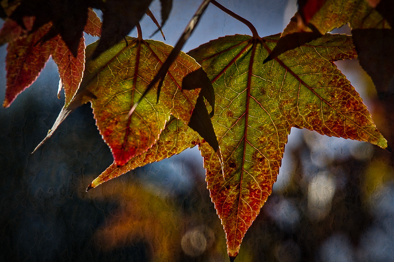 November 4 - Autumn leaf.jpg