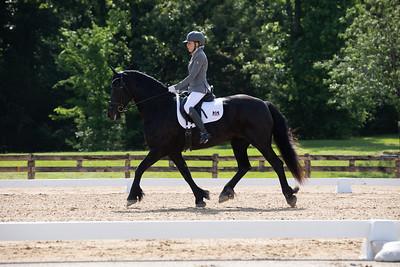 Horse 407