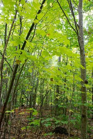 New England 2016: Kancamagus Trail