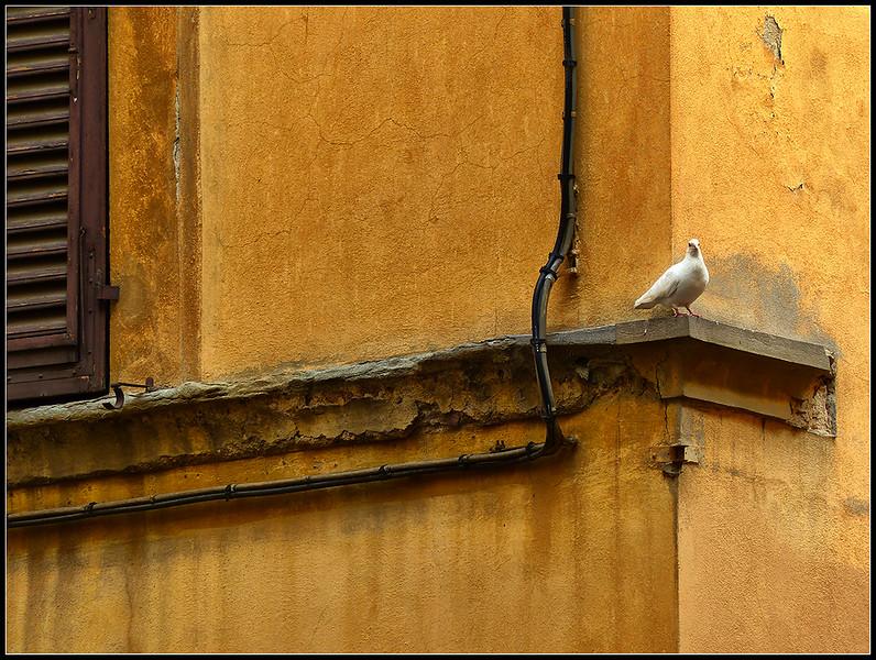 2015-04-Firenze-212-(2).jpg