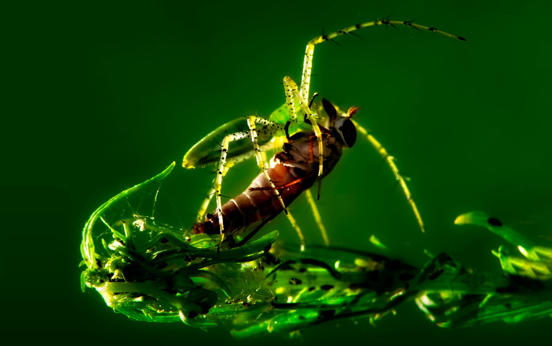 Spiders-Arachnids-088.jpg
