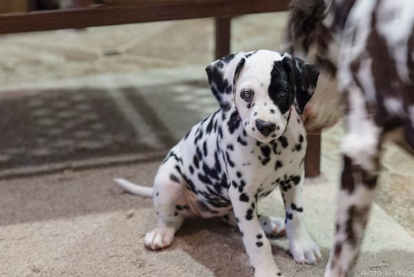 Puppy Frolic