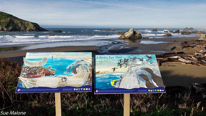 12-18-2020 Summy Friday at the Beach.jpg
