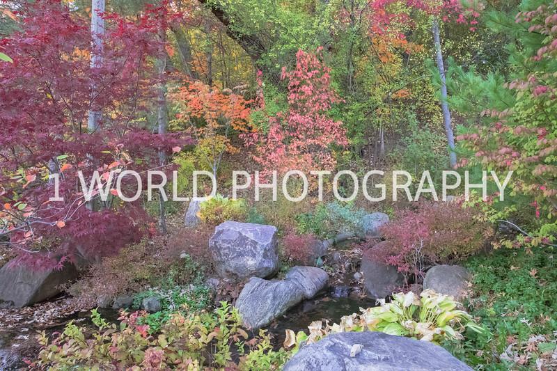 Anderson Japanese Gardens Fall '16-6.jpg