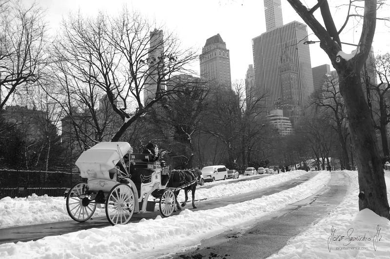 central-park-2021-new-york-new-jersey-newark-photography-photographer-jorge-sarmiento-jr-IMG_7308.jpg