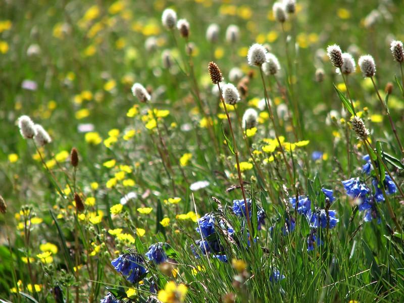 amh FLOWERS (1402).jpg