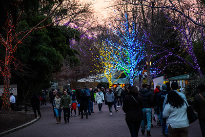 Washington DC - Zoo lights 2015