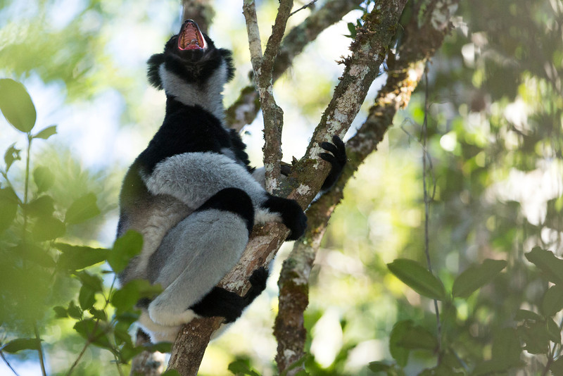 Madagascar_2013_FH0T9312.jpg