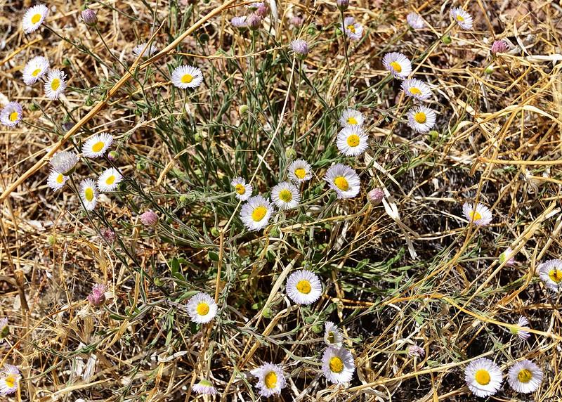 NEA_6907-7x5-Flowers.jpg