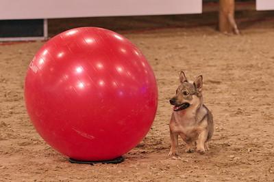 27 augustus 2011 Royal Canin Dog Challenge