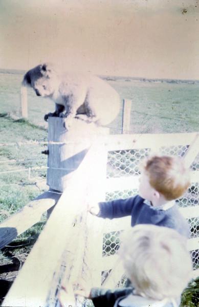 1967-9 (3) Susan 2 yrs 2 mths,  David 3 yrs 9 mths.JPG