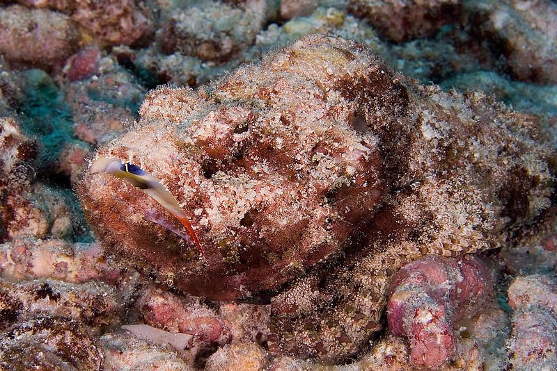 Stone Fish 2.jpg