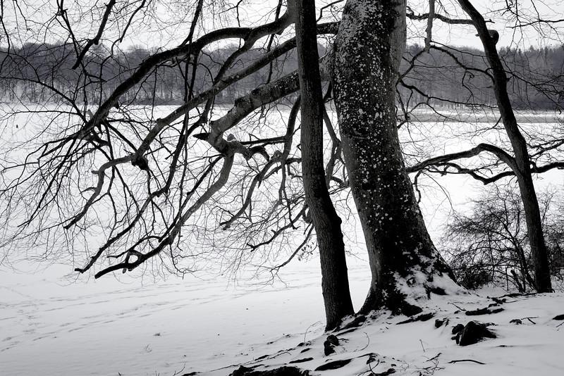 Tree_2649.jpg