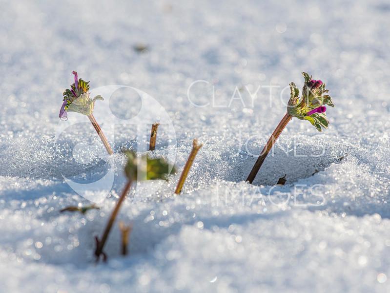wf_backyard_snow_36.jpg