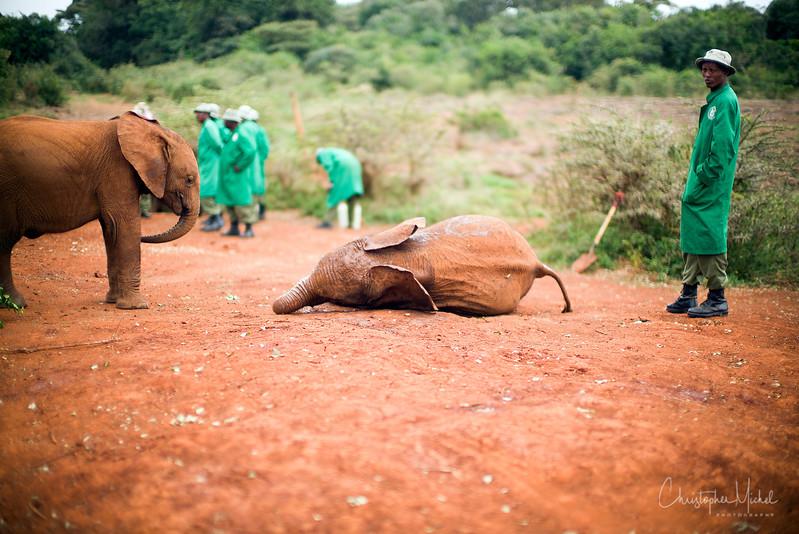 Aug312013_nairobi_blixen_elephant_m9_2820.jpg