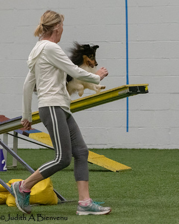 SSCGB All-Sheltie Agility Trial, September 2018