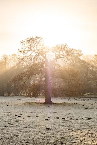 A frosty start (19 of 20).jpg