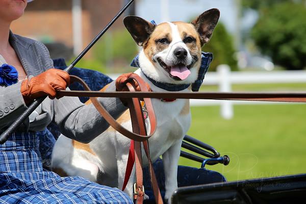 2014 CCF CARRIAGE DOG CLASS