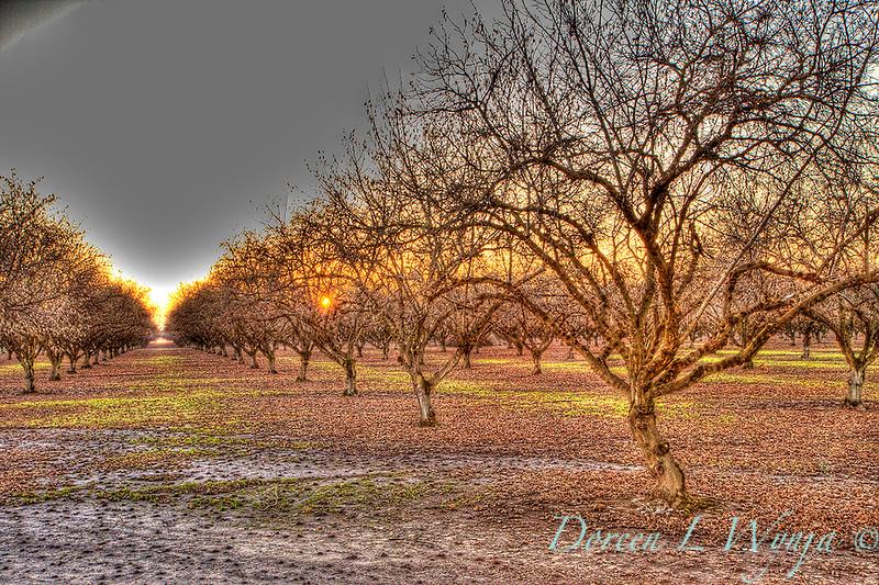 Hazel's Sunset_9789.jpg