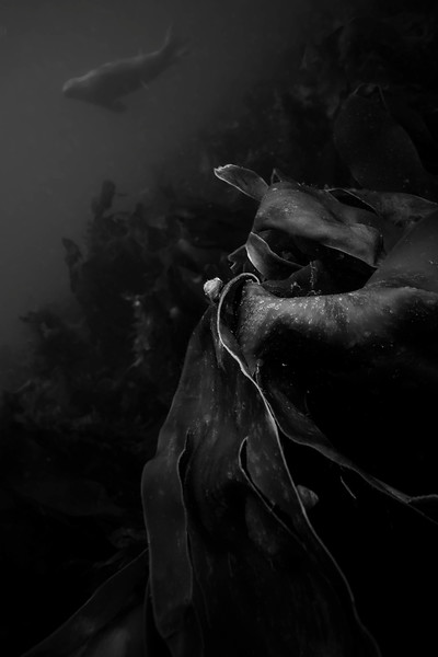 The Farne Islands-081.jpg