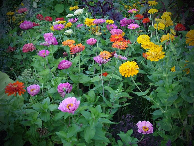 Flowers 088.jpg