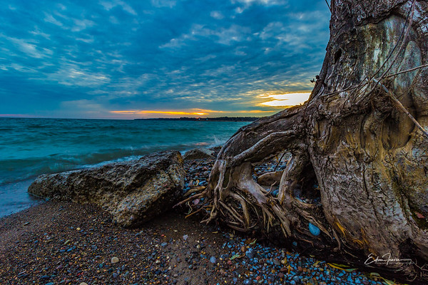 Tree on the beach #1