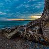 Tree on the beach #1