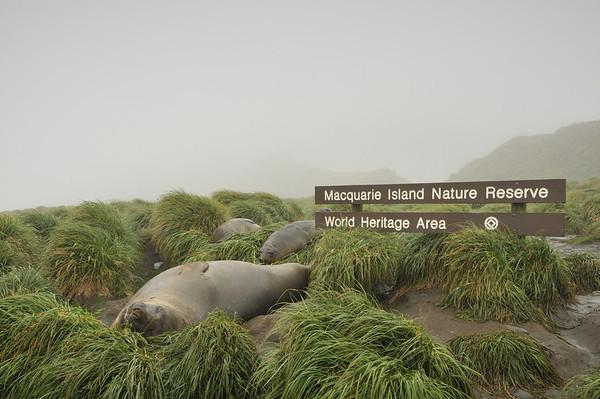 Macquarie Island 2011
