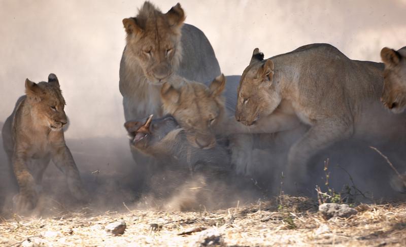 Lion - 9357.jpg