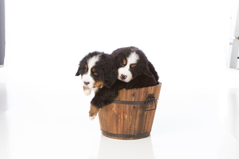 2013-Pearson Pups-Jun02-0408.jpg