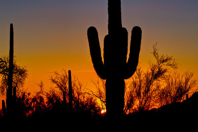 Saguaro National Park_Arizona