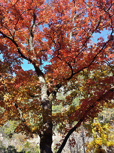Fall Lost Maples 2013