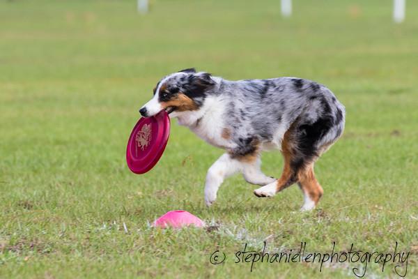 _MG_2455Up_dog_International_2016_StephaniellenPhotography.jpg
