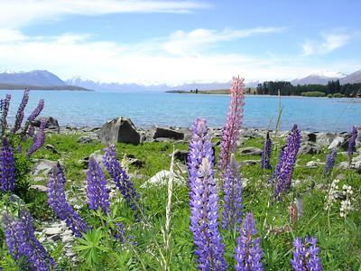 New Zealand 2004