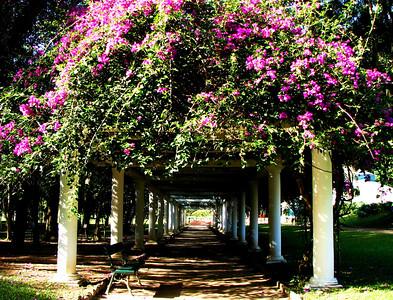 Jardim Botanical Gardens, Rio
