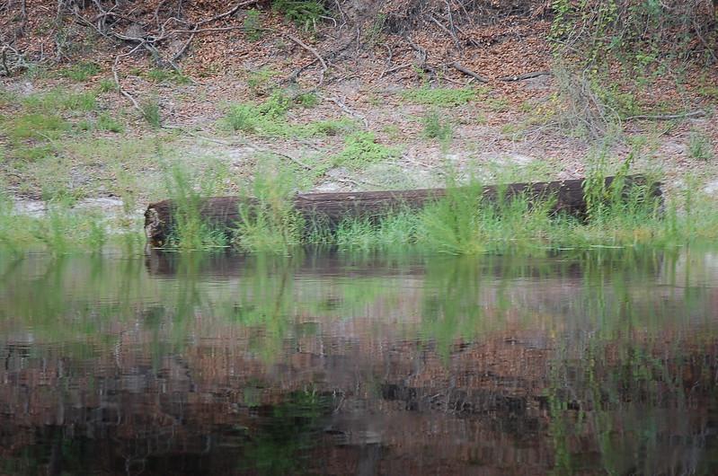Suwannee River Photos
