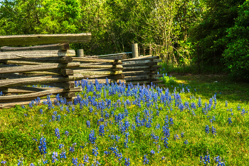 Stacked Fence & Bluebonnets