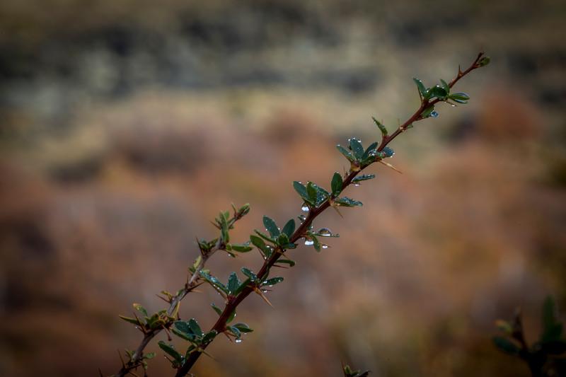 Brush North of El Chalten-1.jpg