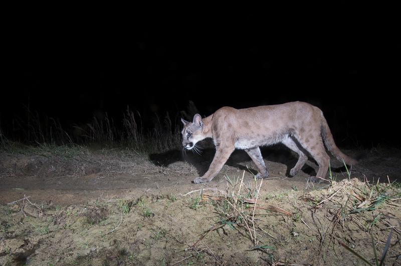 panther 9.jpg
