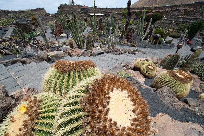 Cactus Garden in Lanzarote Island, Spain