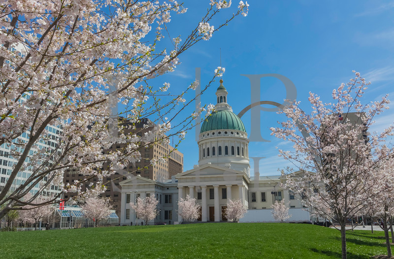 Old Court House Cherry trees-009-2-HDR.jpg