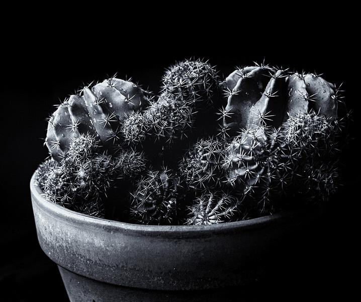 cactus balls illford 50 052520--2.jpg
