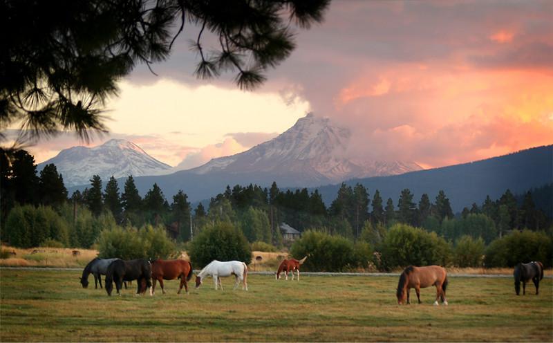 BBR horses sunset 091305-_8313_ktk.jpg