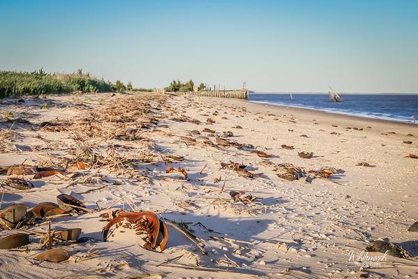 Horseshoe Crab Research 2016