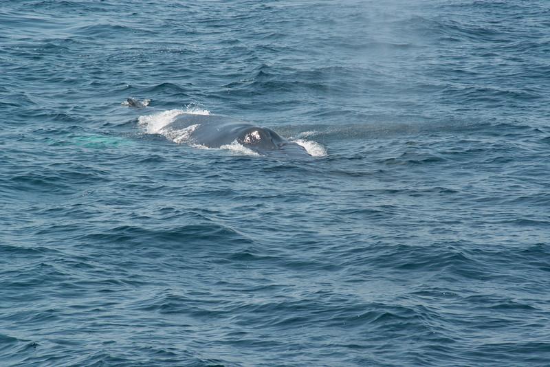 humpbacks-4179.jpg