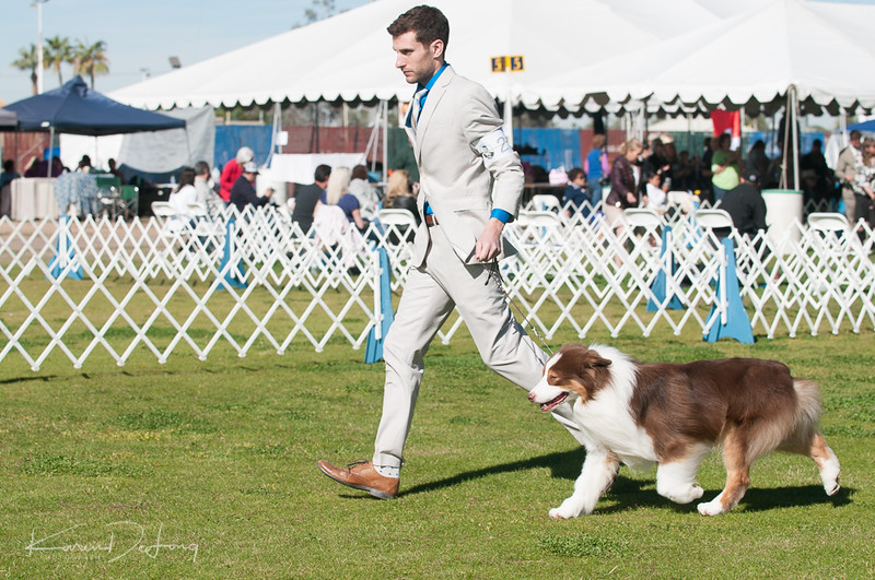 20170205_Australian Shepherds_Lost Dutchman Kennel Club-12.jpg