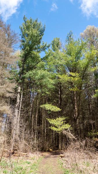 Cold-Creek-Conservation-Area03.jpg