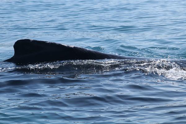 Thursday 1/24/19 Whale/ocean